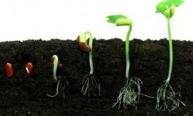 bean-seeds_shutterstock_57850783-272x164
